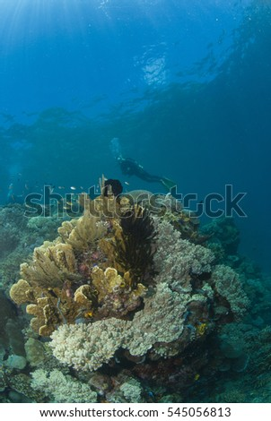 Tropical coral reef and diver from far #545056813