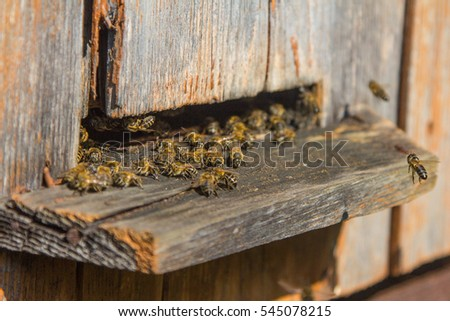 Hives in an apiary with bees flying to the landing boards
