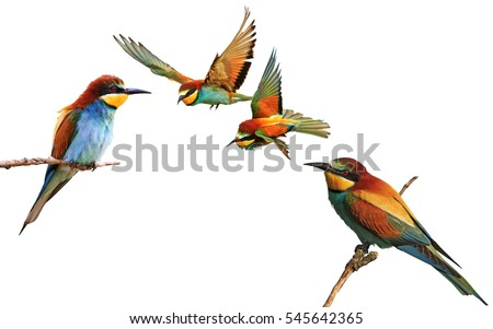 set of colored birds in different poses,birds of paradise, bee-eaters, iridescent colors #545642365