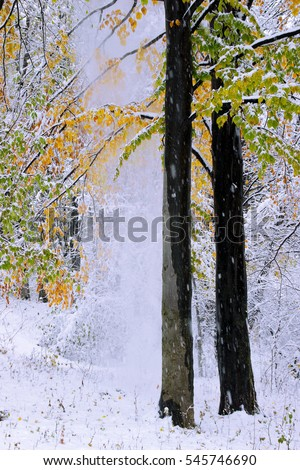 Snow and trees with colorful autumn leaves #545746690