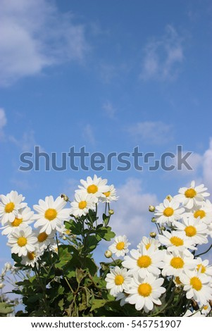 white little daisy flowers under the blue sky and clouds #545751907