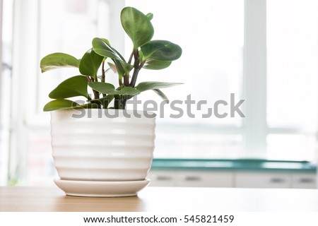 Potted plants on wooden desk #545821459