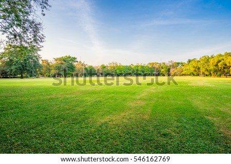 landscape of grass field and green environment public park use as natural background,backdrop #546162769