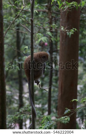 A monkey playing hanging resting on a tree #546222004