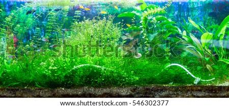 Panoramic large aquarium on a white background