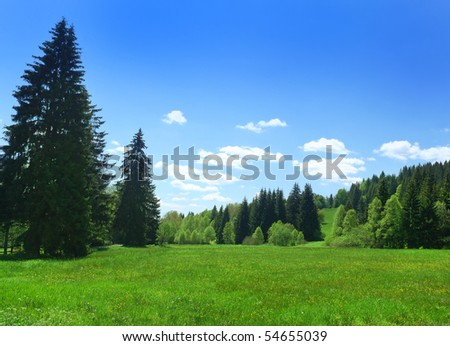 coniferous forest and meadow in sunny day #54655039