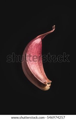 Garlic clove on isolated black background close-up #546974257