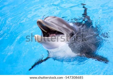 Dolphin #547308685