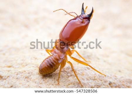 Action termite