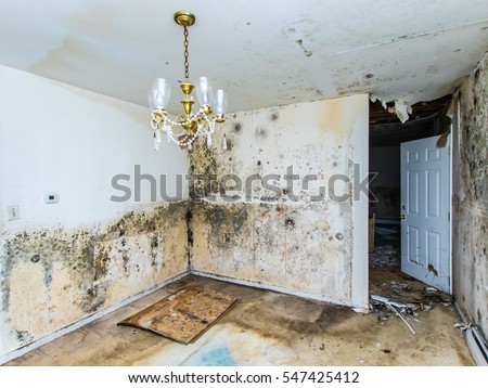 Water damage causing mold growth on the interior walls of a property Royalty-Free Stock Photo #547425412