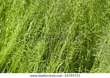 Green grass background #54794725