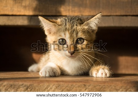 the cute cat in morning,cute cat alone , cat sad,Kitten,cat #547972906