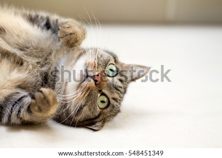 Nice cat playing lying on the ground #548451349