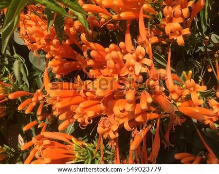 Bright Orange Winter Flower #549023779