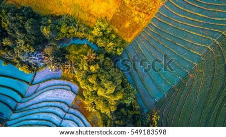 Rice fields of Bali island, Indonesia #549183598