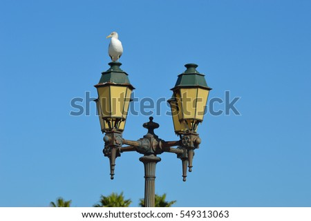 Single Seagull on Old Street Lantern with Clear Blue Sky #549313063