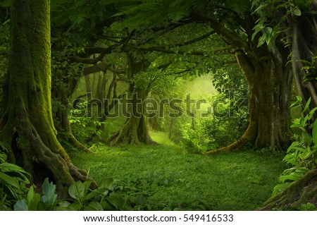 Deep tropical jungles of Southeast Asia in august Royalty-Free Stock Photo #549416533
