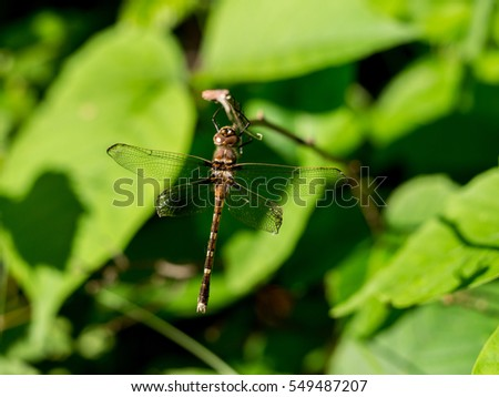 Dragonfly hangs from twig in state park. #549487207