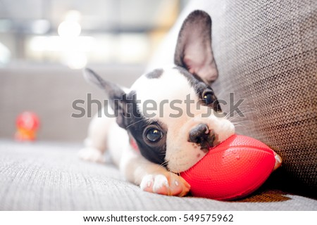 puppy Royalty-Free Stock Photo #549575962