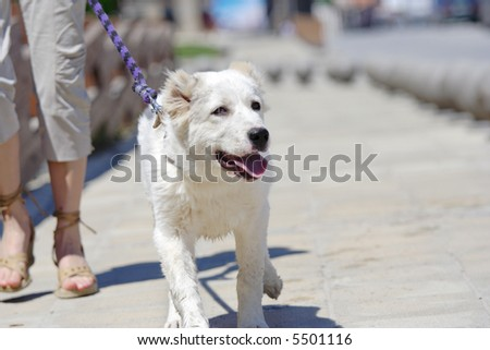 Young woman walking his dog outside #5501116