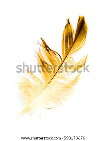 bird feather on white background #550173676