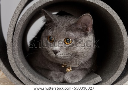 Grey cat sitting in a twisted yoga mat. #550330327
