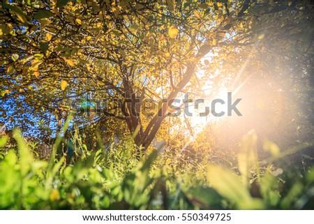 Sunlight through the tree in warm autumn #550349725
