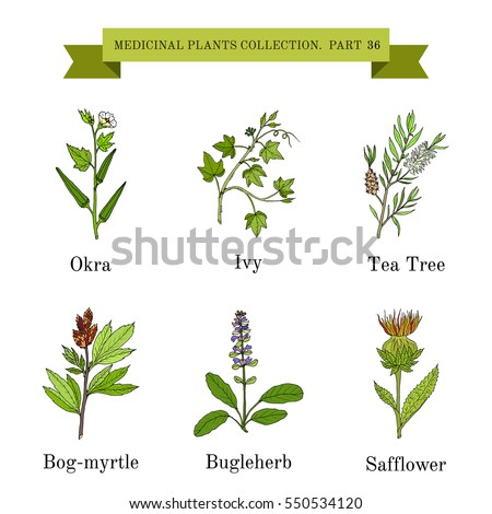 Vintage collection of hand drawn medical herbs and plants. Botanical vector illustration #550534120