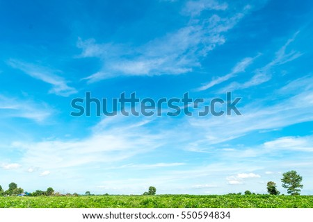 Blue sky and cloud with meadow tree. Plain landscape background for summer poster.  #550594834