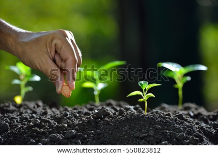Farmer's hand planting a seed in soil Royalty-Free Stock Photo #550823812