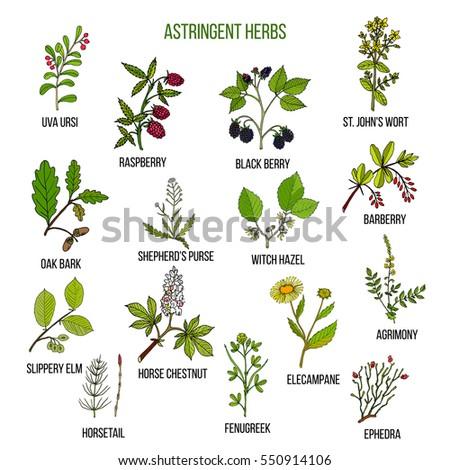 Astringent herbs. Hand drawn vector set of medicinal plants #550914106