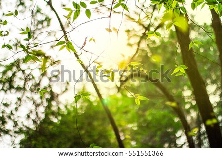 Abstract nature leave background with sunlight. Natural forest. #551551366