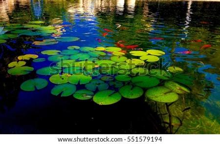 Coy Pond #551579194