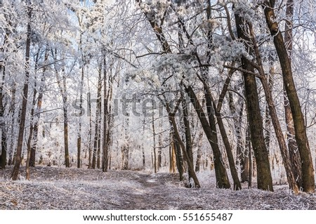 Winter scene of a snowy trees completely covered with frost #551655487