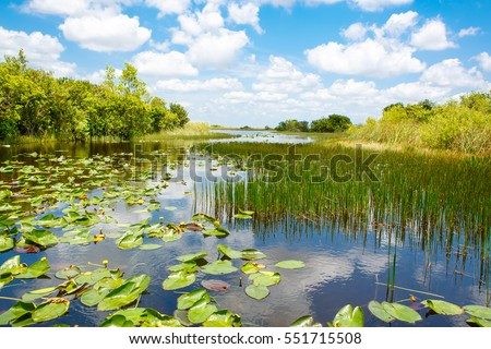 Florida wetland, Airboat ride at Everglades National Park in USA. Popular place for tourists, wild nature and animals. #551715508