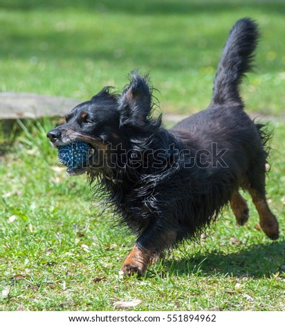 Cute black and brown dog  #551894962
