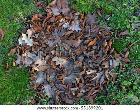 autumn grass greens leaves rotten #551899201