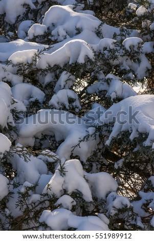 Fresh snow covering a bush  #551989912