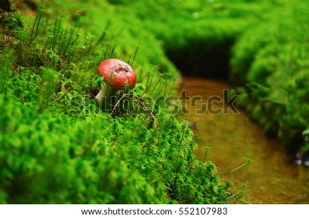 Red mushroom on beautiful green grass near by water in untouchable nature