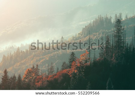 beautiful summer landscape in mountains #552209566