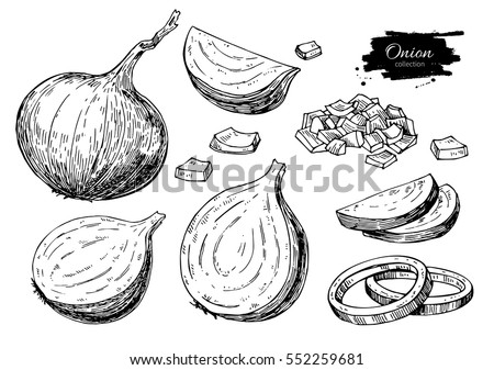 Onion hand drawn vector set. Full, rings and Half cutout slice. Isolated Vegetable engraved style object. Detailed vegetarian food drawing. Farm market product. Great for menu, label, icon Royalty-Free Stock Photo #552259681
