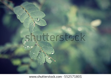 Green leaves with water drops after the rain - soft blur focus - vintage photo effect