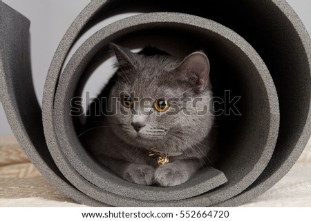 Grey cat sitting in a twisted yoga mat. #552664720