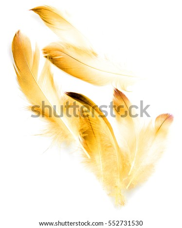bird feather on white background #552731530
