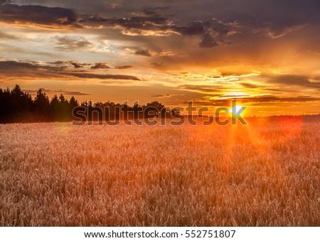 Clear field in the sunset. Fall in Czech Republic. #552751807