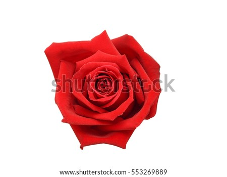 Natural red rose isolated on white background #553269889