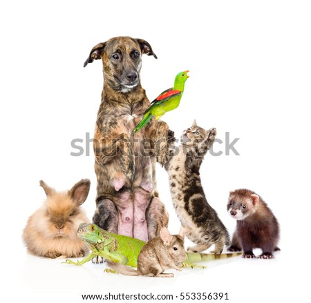 Group of funny pets. isolated on white background #553356391