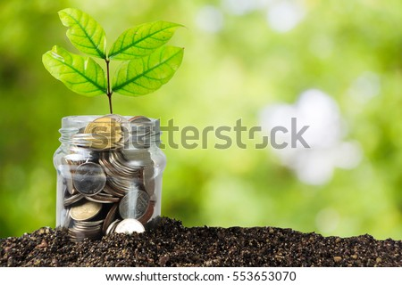 Savings money jar full of coins on soil /Plant Growing In Savings Coins/ investment and etirement or education Concept  #553653070