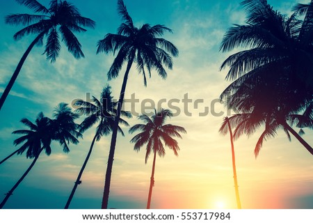 Silhouettes of palm trees against the sky during a tropical sunset. #553717984