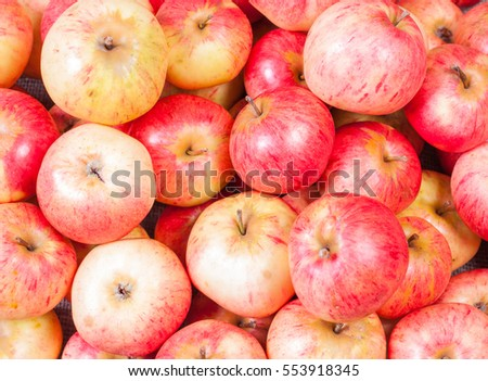 A bunch of red apples fresh harvest #553918345